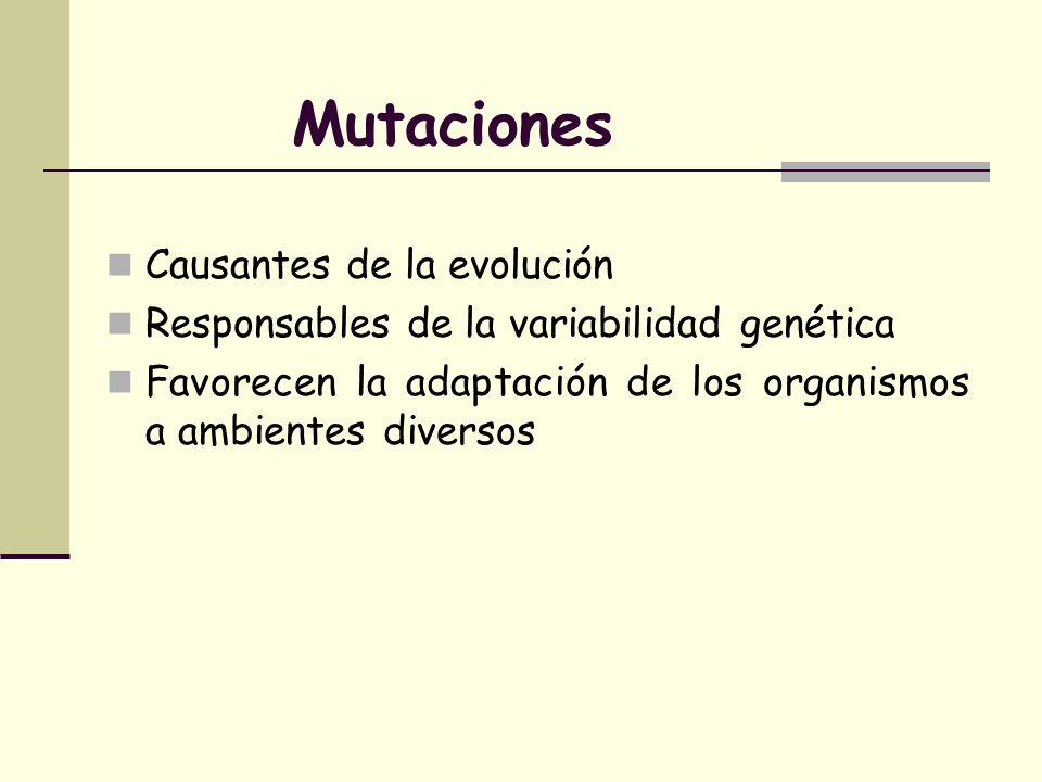 Mutaciones Causantes de la evolución Responsables de la variabilidad genética Favorecen la adaptación de los organismos a ambientes diversos