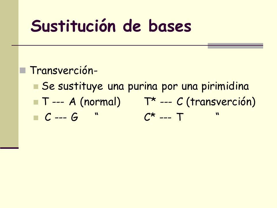 Sustitución de bases Transverción- Se sustituye una purina por una pirimidina T --- A (normal) T* --- C (transverción) C --- G C* --- T