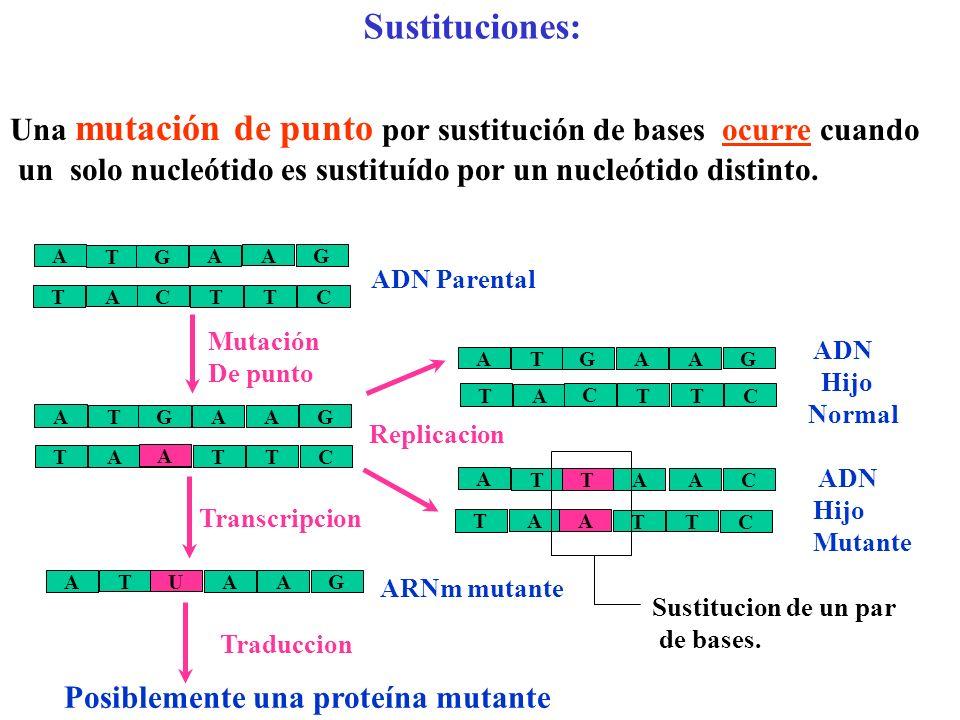 Mutaciones génicas o de punto Se llaman también mutaciones verdaderas Tipos de mutaciones génicas: Sustituciones a) Silenciosas b) Cambio de sentido c