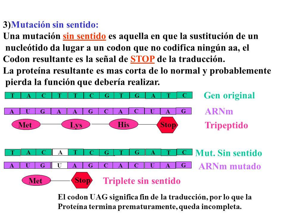 Glóbulos rojos normalesGlóbulos rojos anormales Agregación de las moléculas de hemoglobina Las moléculas de hemoglobina no se agregan ADN mutado