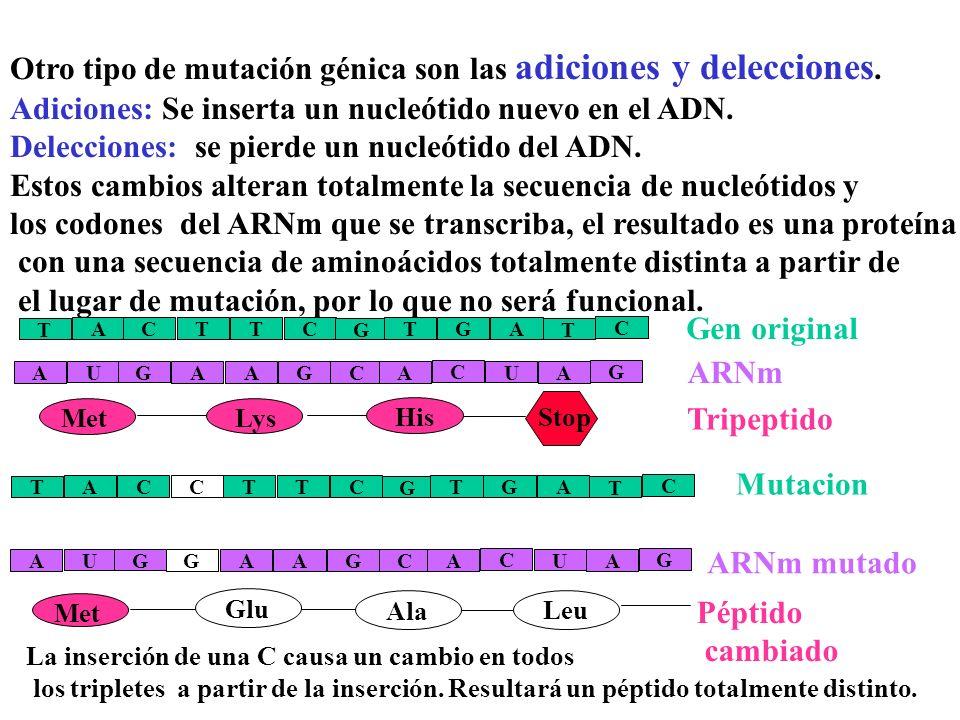 3)Mutación sin sentido: Una mutación sin sentido es aquella en que la sustitución de un nucleótido da lugar a un codon que no codifica ningún aa, el C