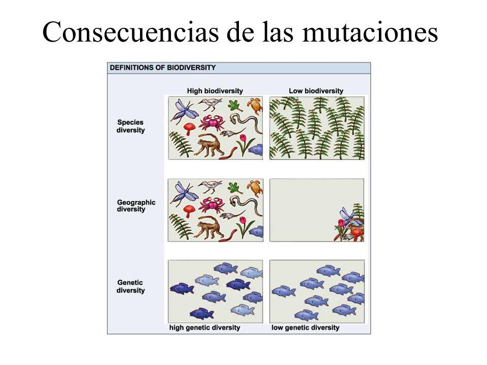 La probabilidad de que un gen mute es como media de 10 -9. La presencia de mutágenos hace aumentar la tasa de mutación entre 10 -5 a 10 -3. Esto signi