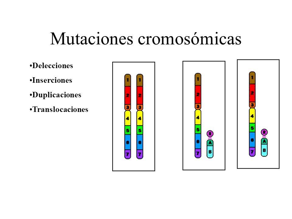Tipos de mutaciones (Según la extensión de la mutación) Génicas o verdaderas: afectan a un solo gen Cromosómicas : afectan a fragmentos de cromosomas