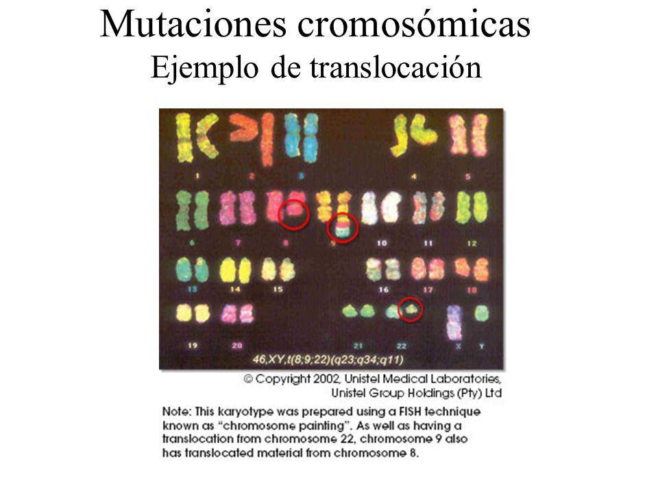 Mutaciones cromosómicas Delecciones Inserciones Duplicaciones Translocaciones