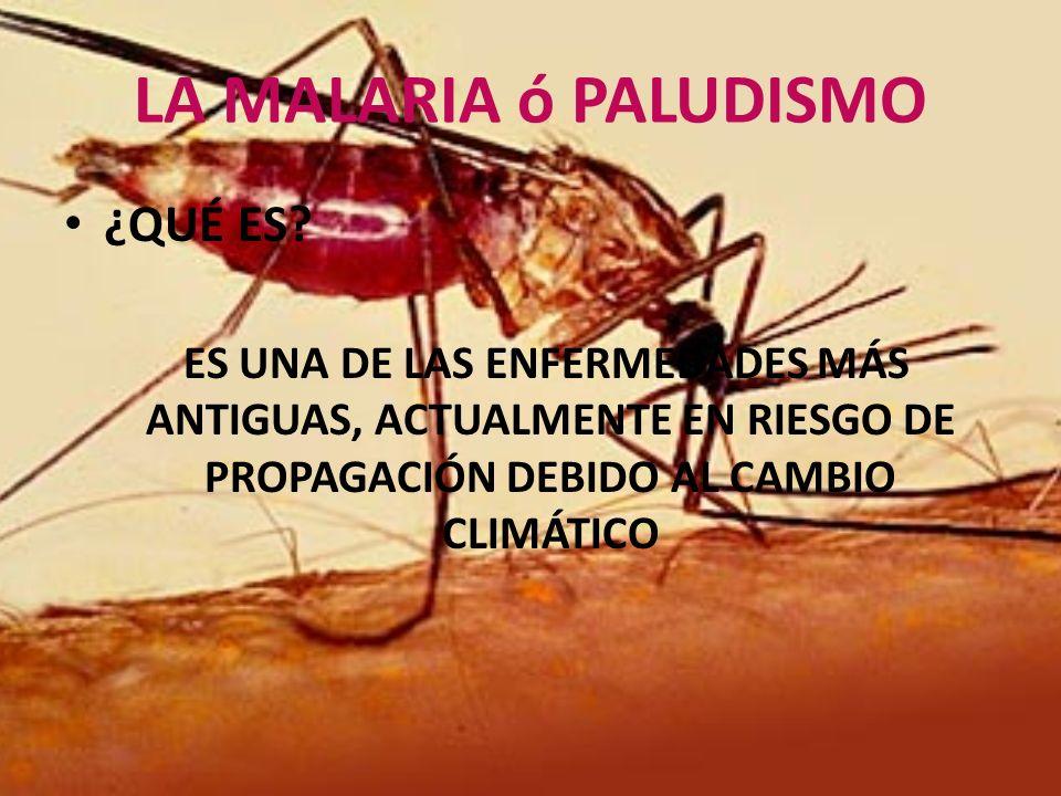 LA MALARIA ó PALUDISMO ¿QUÉ ES? ES UNA DE LAS ENFERMEDADES MÁS ANTIGUAS, ACTUALMENTE EN RIESGO DE PROPAGACIÓN DEBIDO AL CAMBIO CLIMÁTICO