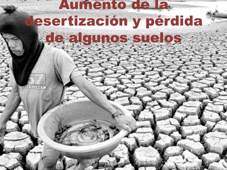 Aumento de la desertización y pérdida de algunos suelos