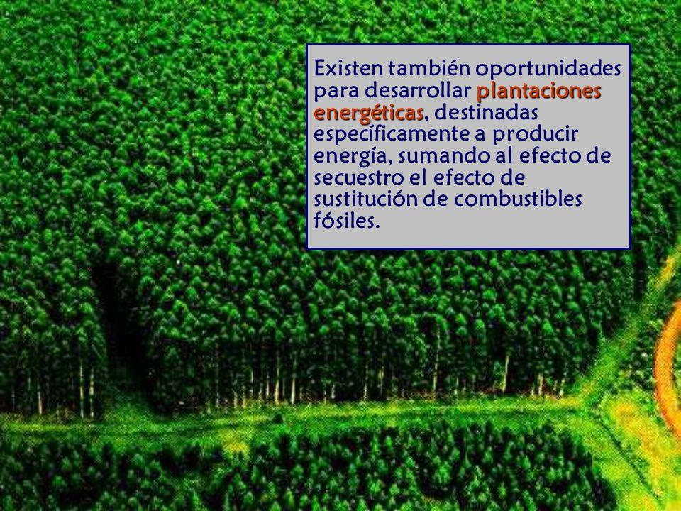 plantaciones energéticas Existen también oportunidades para desarrollar plantaciones energéticas, destinadas específicamente a producir energía, sumando al efecto de secuestro el efecto de sustitución de combustibles fósiles.