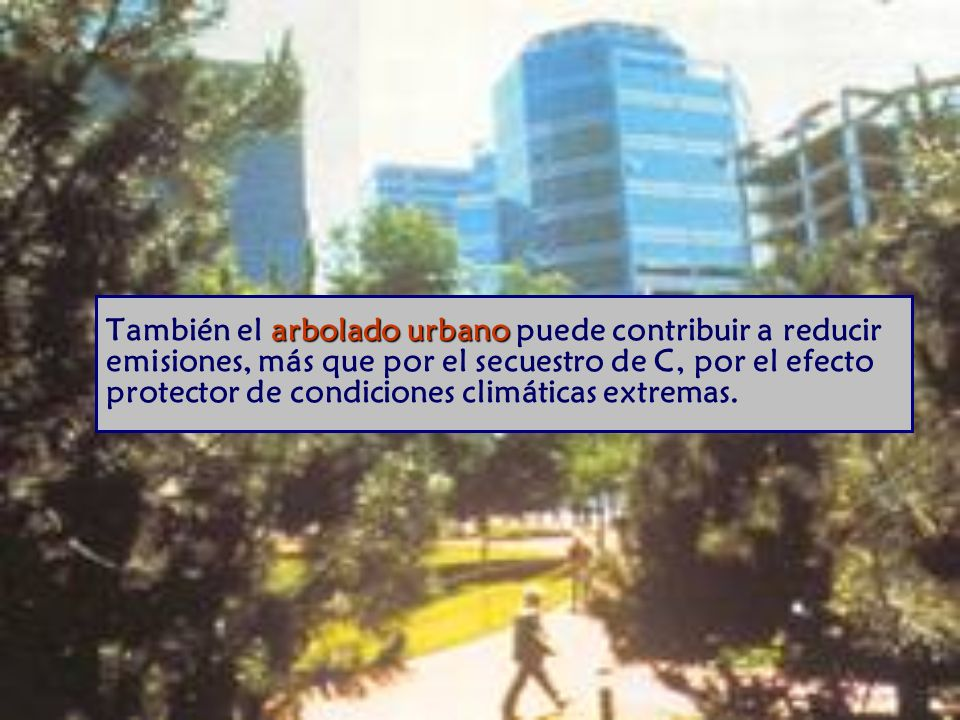 arbolado urbano También el arbolado urbano puede contribuir a reducir emisiones, más que por el secuestro de C, por el efecto protector de condiciones climáticas extremas.