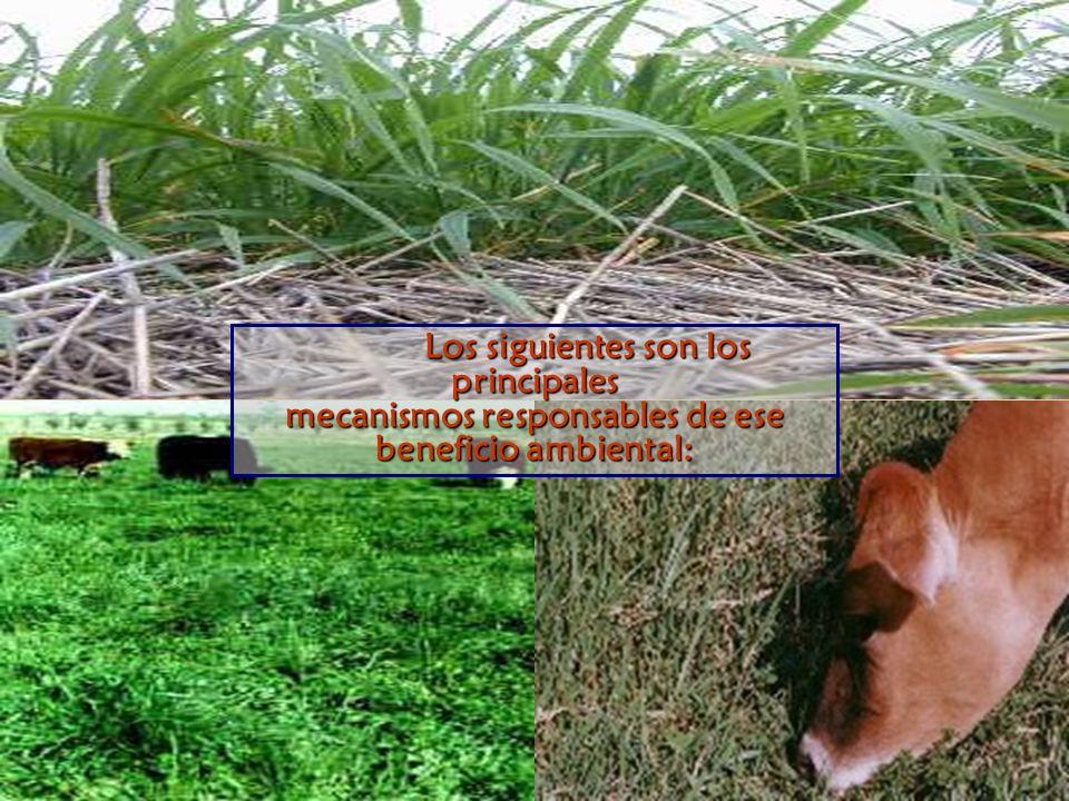 Los siguientes son los principales mecanismos responsables de ese beneficio ambiental: