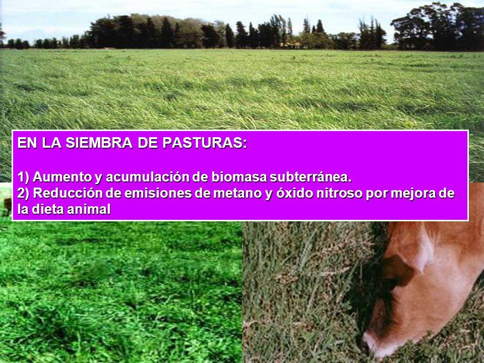 EN LA SIEMBRA DE PASTURAS: 1) Aumento y acumulación de biomasa subterránea.