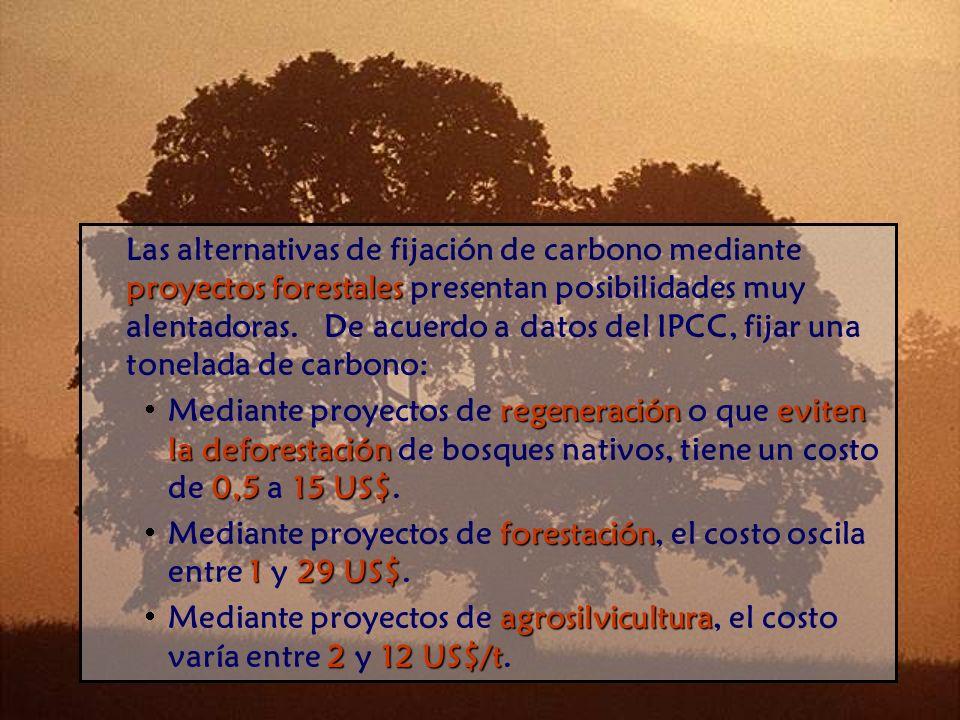proyectos forestales Las alternativas de fijación de carbono mediante proyectos forestales presentan posibilidades muy alentadoras.