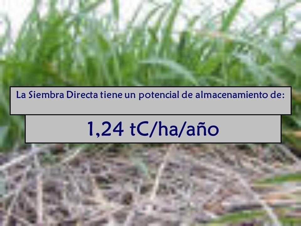 La Siembra Directa tiene un potencial de almacenamiento de: 1,24 tC/ha/año