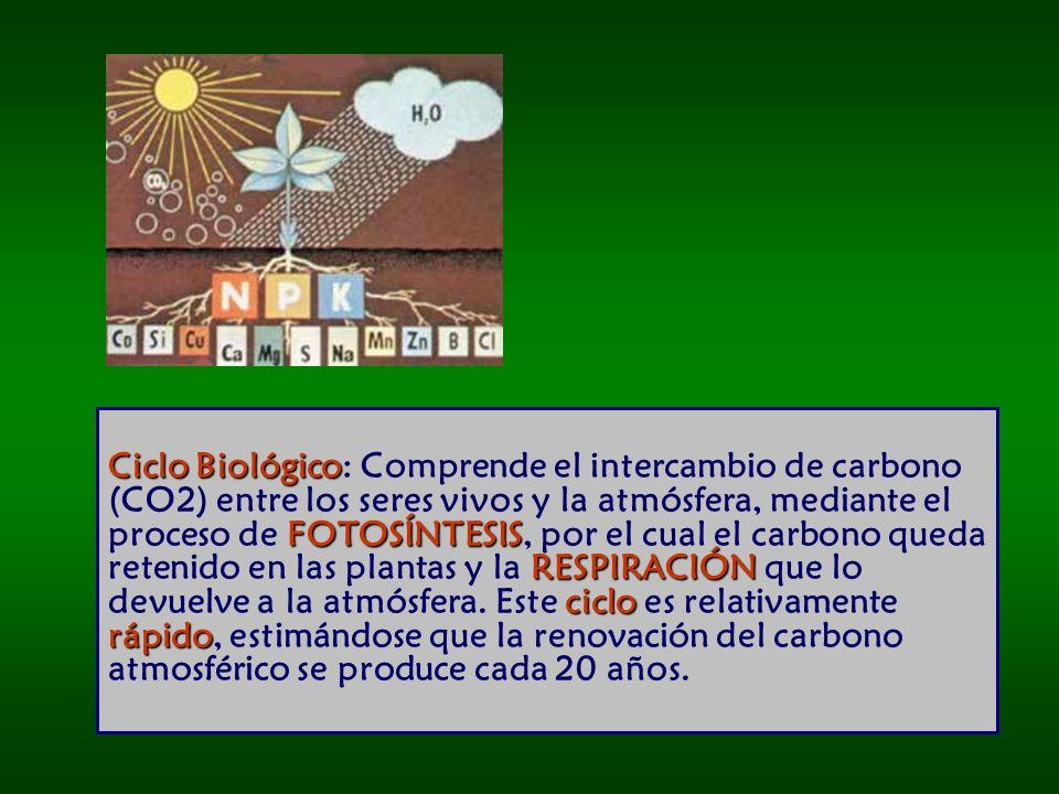 Ciclo Biológico FOTOSÍNTESIS RESPIRACIÓN ciclo rápido Ciclo Biológico: Comprende el intercambio de carbono (CO2) entre los seres vivos y la atmósfera, mediante el proceso de FOTOSÍNTESIS, por el cual el carbono queda retenido en las plantas y la RESPIRACIÓN que lo devuelve a la atmósfera.