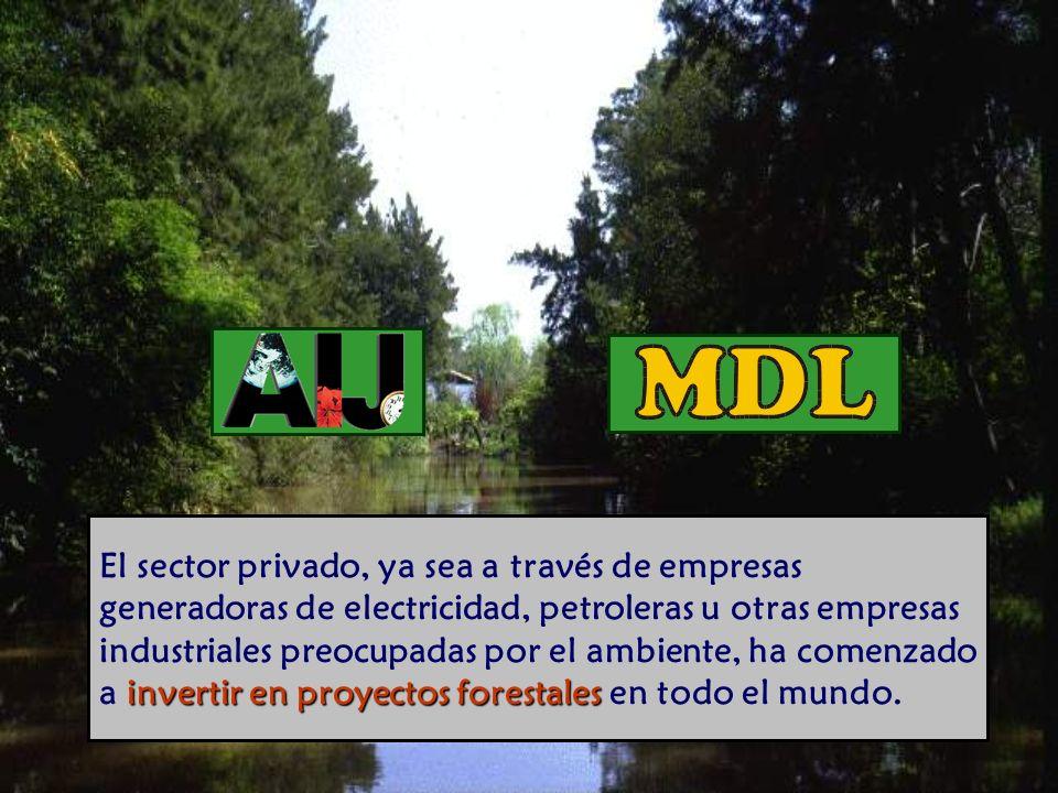 invertir en proyectos forestales El sector privado, ya sea a través de empresas generadoras de electricidad, petroleras u otras empresas industriales preocupadas por el ambiente, ha comenzado a invertir en proyectos forestales en todo el mundo.