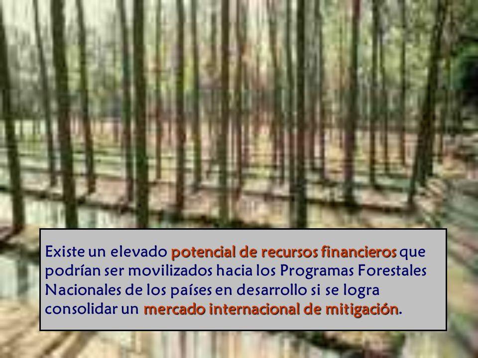 potencial de recursos financieros mercado internacional de mitigación Existe un elevado potencial de recursos financieros que podrían ser movilizados hacia los Programas Forestales Nacionales de los países en desarrollo si se logra consolidar un mercado internacional de mitigación.
