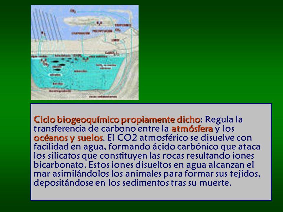 Ciclo biogeoquímico propiamente dicho atmósfera océanos y suelos Ciclo biogeoquímico propiamente dicho: Regula la transferencia de carbono entre la atmósfera y los océanos y suelos.