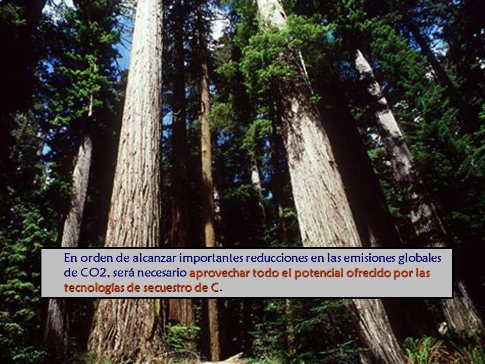 aprovechar todo el potencial ofrecido por las tecnologías de secuestro de C En orden de alcanzar importantes reducciones en las emisiones globales de CO2, será necesario aprovechar todo el potencial ofrecido por las tecnologías de secuestro de C.