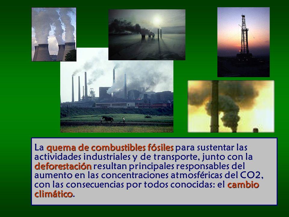 quema de combustibles fósiles deforestación cambio climático La quema de combustibles fósiles para sustentar las actividades industriales y de transporte, junto con la deforestación resultan principales responsables del aumento en las concentraciones atmosféricas del CO2, con las consecuencias por todos conocidas: el cambio climático.