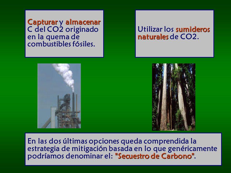 Secuestro de Carbono En las dos últimas opciones queda comprendida la estrategia de mitigación basada en lo que genéricamente podríamos denominar el: Secuestro de Carbono .