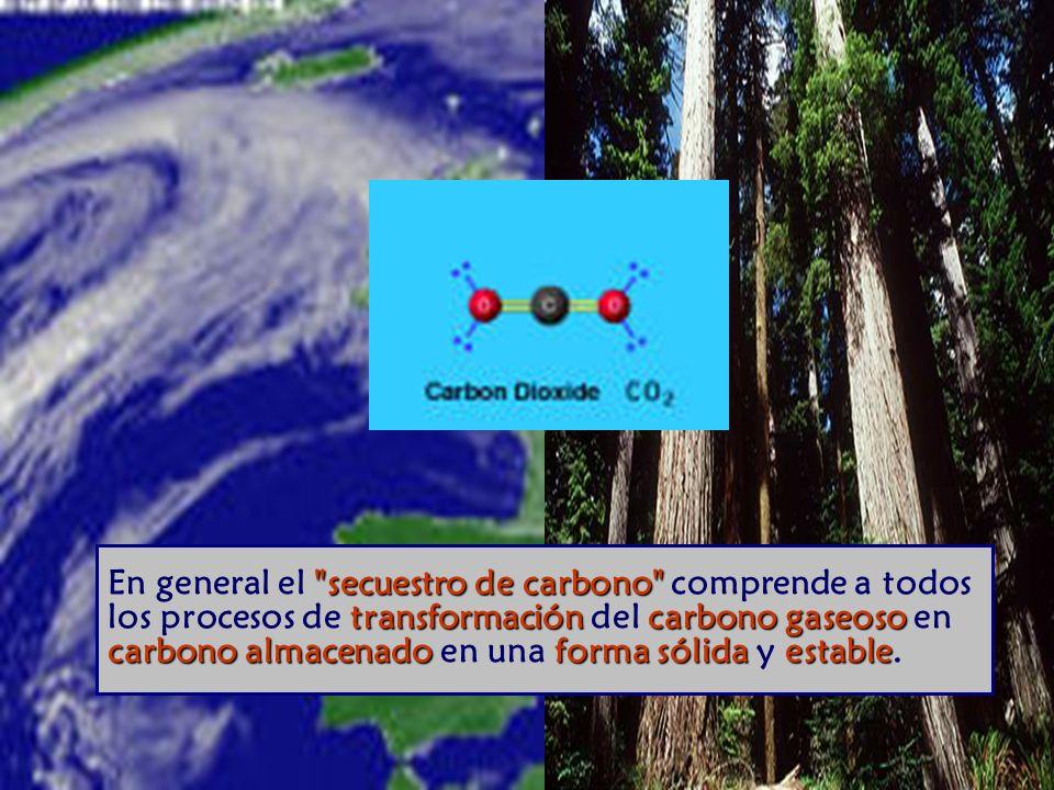 secuestro de carbono transformación carbono gaseoso carbono almacenado forma sólida estable En general el secuestro de carbono comprende a todos los procesos de transformación del carbono gaseoso en carbono almacenado en una forma sólida y estable.