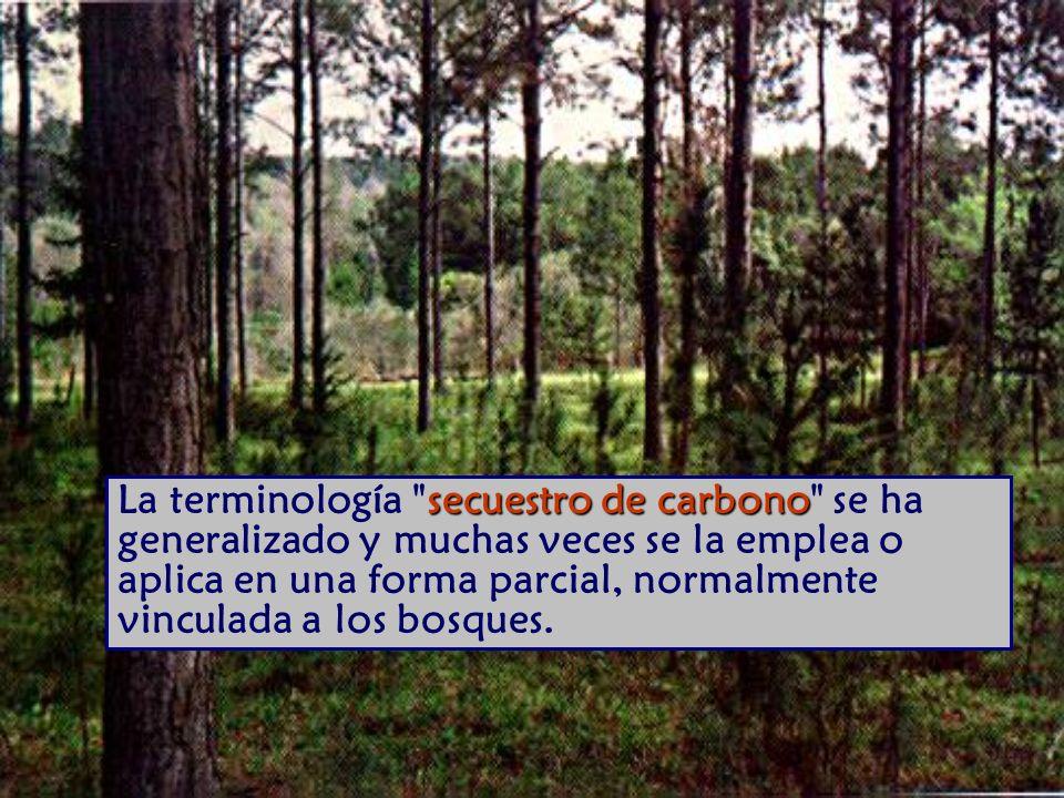 secuestro de carbono La terminología secuestro de carbono se ha generalizado y muchas veces se la emplea o aplica en una forma parcial, normalmente vinculada a los bosques.