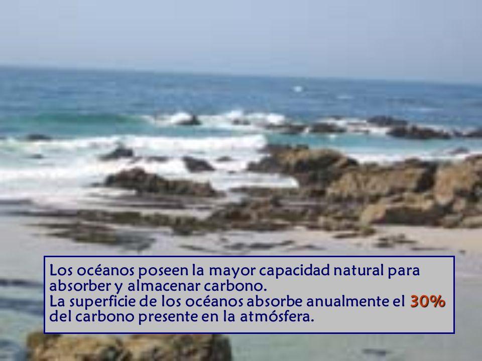 30% Los océanos poseen la mayor capacidad natural para absorber y almacenar carbono.