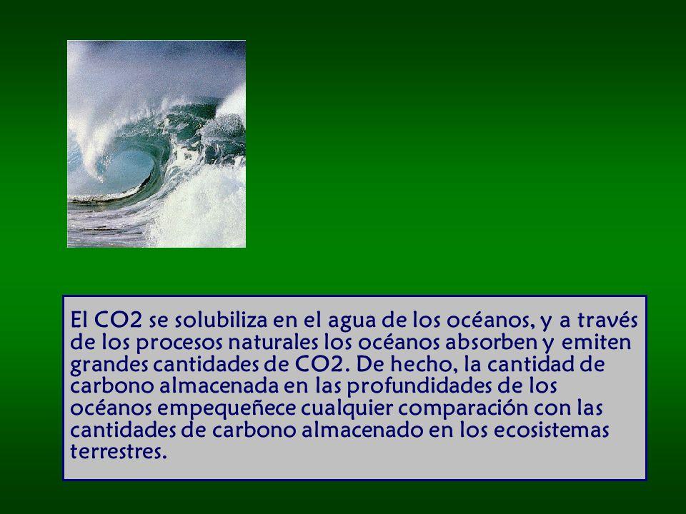 El CO2 se solubiliza en el agua de los océanos, y a través de los procesos naturales los océanos absorben y emiten grandes cantidades de CO2.