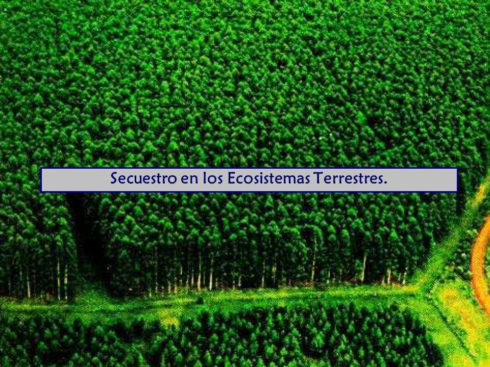 Secuestro en los Ecosistemas Terrestres.