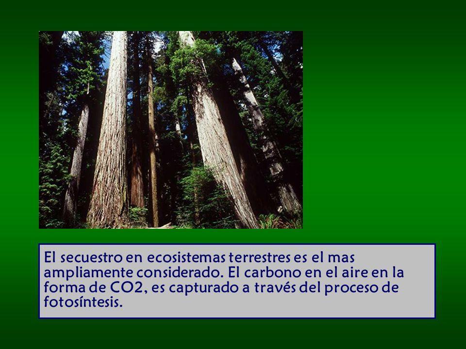 El secuestro en ecosistemas terrestres es el mas ampliamente considerado.