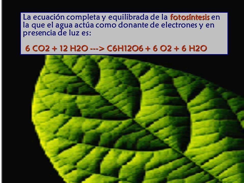 fotosíntesis 6 CO2 + 12 H2O ---> C6H12O6 + 6 O2 + 6 H2O La ecuación completa y equilibrada de la fotosíntesis en la que el agua actúa como donante de electrones y en presencia de luz es: 6 CO2 + 12 H2O ---> C6H12O6 + 6 O2 + 6 H2O