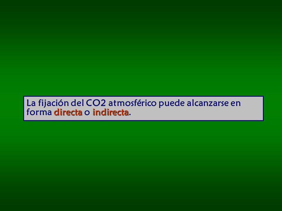directa indirecta La fijación del CO2 atmosférico puede alcanzarse en forma directa o indirecta.
