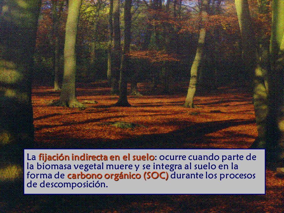 fijación indirecta en el suelo carbono orgánico (SOC) La fijación indirecta en el suelo: ocurre cuando parte de la biomasa vegetal muere y se integra al suelo en la forma de carbono orgánico (SOC) durante los procesos de descomposición.
