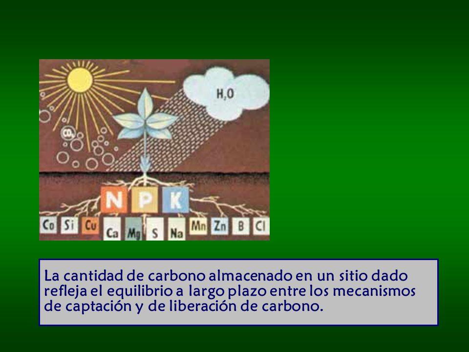 La cantidad de carbono almacenado en un sitio dado refleja el equilibrio a largo plazo entre los mecanismos de captación y de liberación de carbono.
