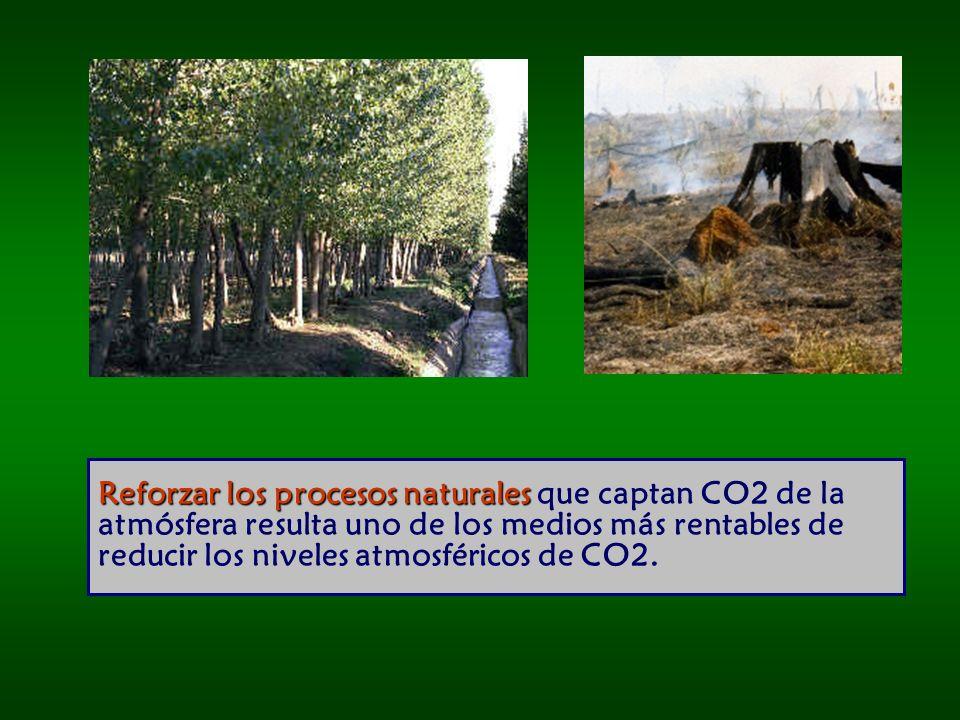 Reforzar los procesos naturales Reforzar los procesos naturales que captan CO2 de la atmósfera resulta uno de los medios más rentables de reducir los niveles atmosféricos de CO2.