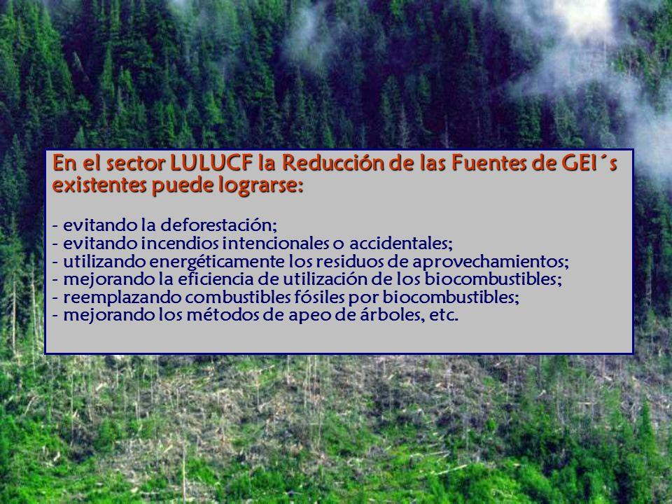 En el sector LULUCF la Reducción de las Fuentes de GEI´s existentes puede lograrse: En el sector LULUCF la Reducción de las Fuentes de GEI´s existentes puede lograrse: - evitando la deforestación; - evitando incendios intencionales o accidentales; - utilizando energéticamente los residuos de aprovechamientos; - mejorando la eficiencia de utilización de los biocombustibles; - reemplazando combustibles fósiles por biocombustibles; - mejorando los métodos de apeo de árboles, etc.
