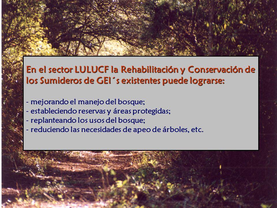 En el sector LULUCF la Rehabilitación y Conservación de los Sumideros de GEI´s existentes puede lograrse: En el sector LULUCF la Rehabilitación y Conservación de los Sumideros de GEI´s existentes puede lograrse: - mejorando el manejo del bosque; - estableciendo reservas y áreas protegidas; - replanteando los usos del bosque; - reduciendo las necesidades de apeo de árboles, etc.