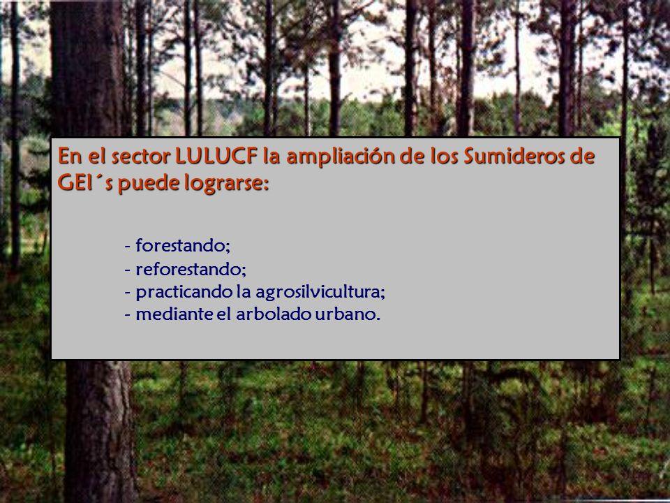 En el sector LULUCF la ampliación de los Sumideros de GEI´s puede lograrse: En el sector LULUCF la ampliación de los Sumideros de GEI´s puede lograrse: - forestando; - reforestando; - practicando la agrosilvicultura; - mediante el arbolado urbano.