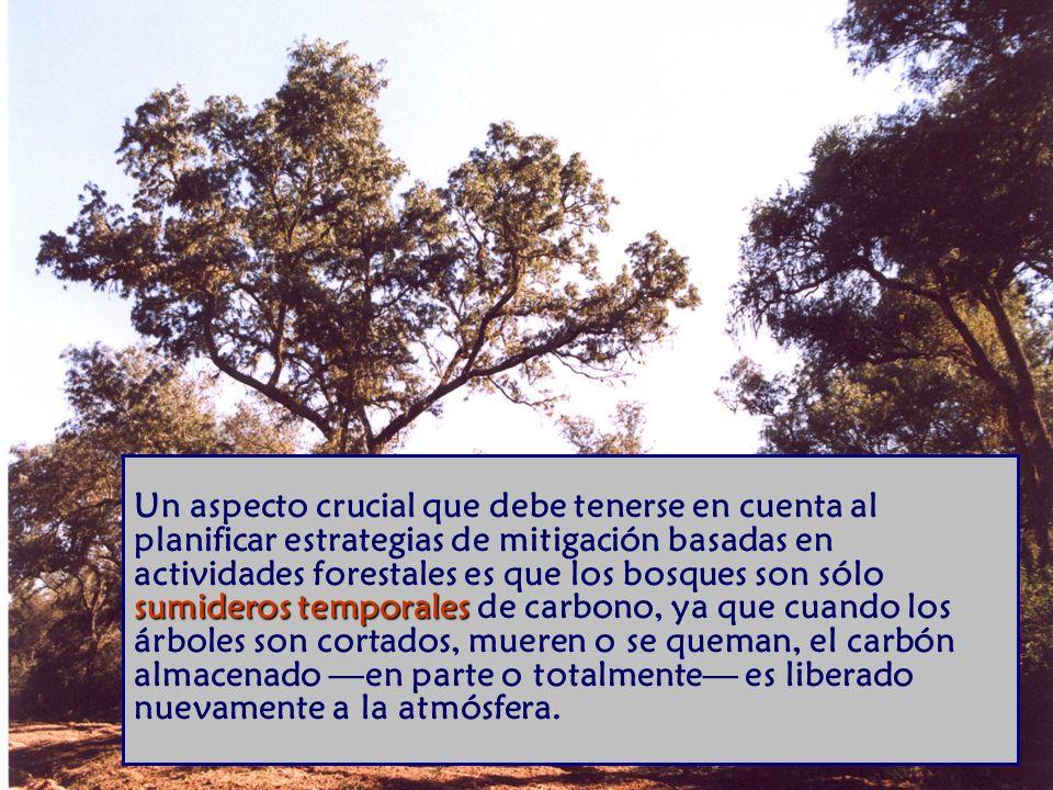 sumideros temporales Un aspecto crucial que debe tenerse en cuenta al planificar estrategias de mitigación basadas en actividades forestales es que los bosques son sólo sumideros temporales de carbono, ya que cuando los árboles son cortados, mueren o se queman, el carbón almacenado en parte o totalmente es liberado nuevamente a la atmósfera.