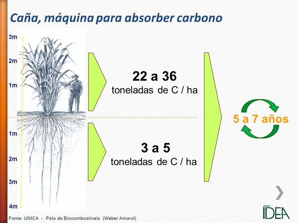 3m 2m 1m 2m 3m 4m 22 a 36 toneladas de C / ha 3 a 5 toneladas de C / ha 5 a 7 años Fonte: UNICA - Pólo de Biocombustíveis (Weber Amaral) Caña, máquina