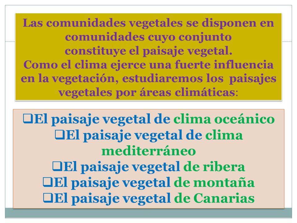 Las comunidades vegetales se disponen en comunidades cuyo conjunto constituye el paisaje vegetal. Como el clima ejerce una fuerte influencia en la veg