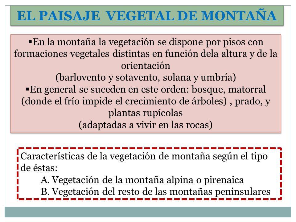 EL PAISAJE VEGETAL DE MONTAÑA En la montaña la vegetación se dispone por pisos con formaciones vegetales distintas en función dela altura y de la orie