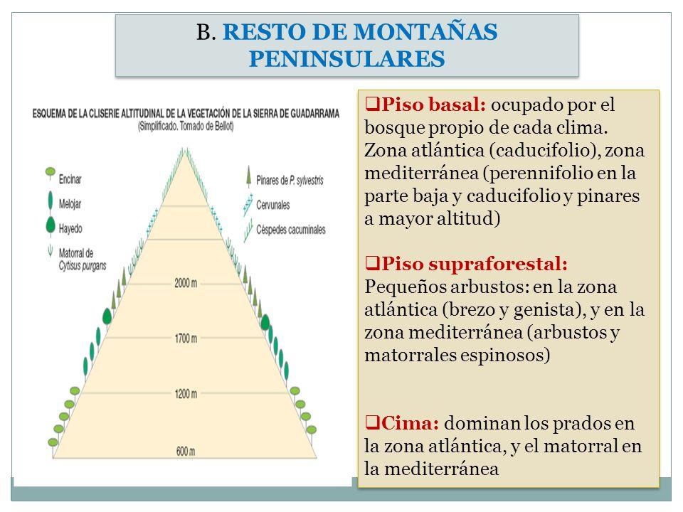 B. RESTO DE MONTAÑAS PENINSULARES Piso basal: ocupado por el bosque propio de cada clima. Zona atlántica (caducifolio), zona mediterránea (perennifoli