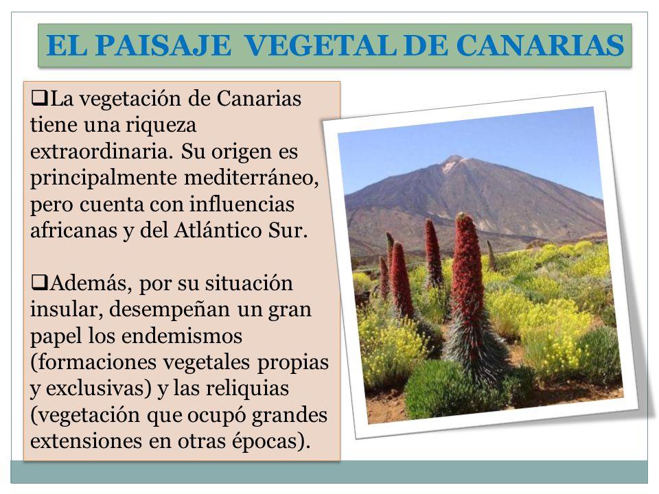La vegetación de Canarias tiene una riqueza extraordinaria. Su origen es principalmente mediterráneo, pero cuenta con influencias africanas y del Atlá