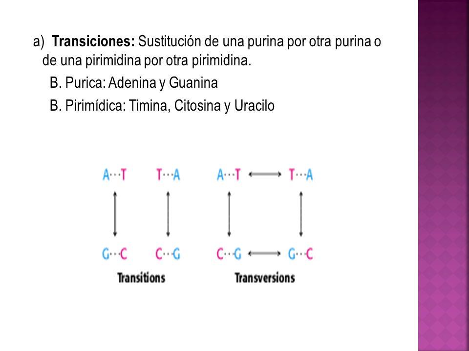 a) Transiciones: Sustitución de una purina por otra purina o de una pirimidina por otra pirimidina. B. Purica: Adenina y Guanina B. Pirimídica: Timina
