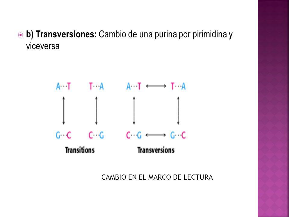 b) Transversiones: Cambio de una purina por pirimidina y viceversa CAMBIO EN EL MARCO DE LECTURA