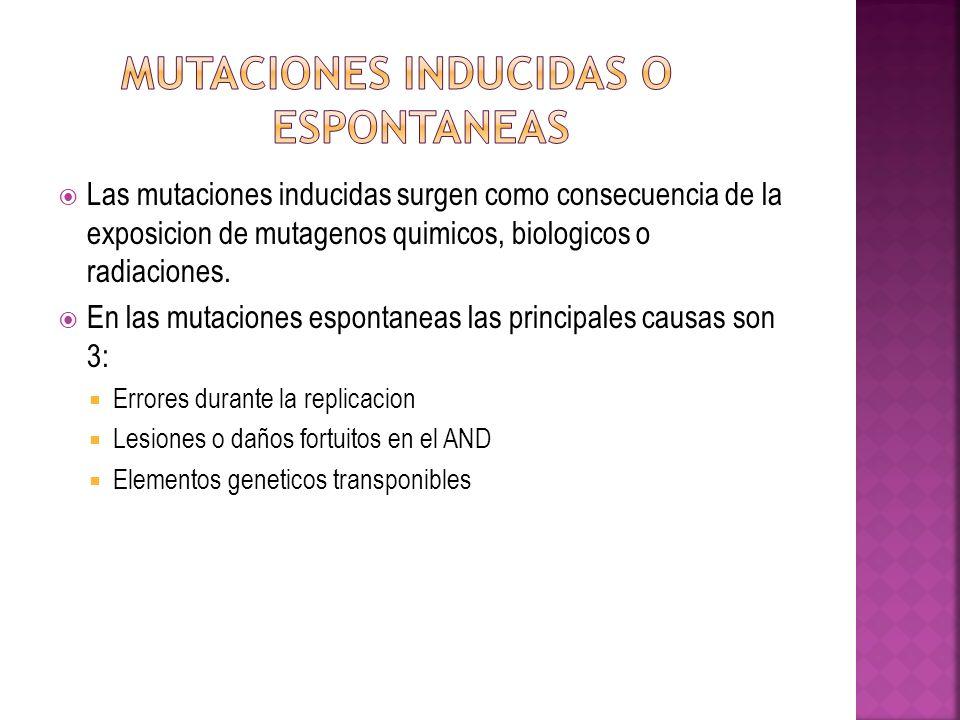 Las mutaciones inducidas surgen como consecuencia de la exposicion de mutagenos quimicos, biologicos o radiaciones. En las mutaciones espontaneas las