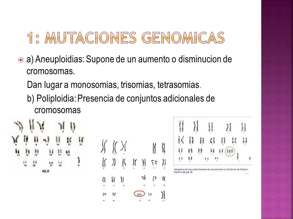 a) Aneuploidias: Supone de un aumento o disminucion de cromosomas. Dan lugar a monosomias, trisomias, tetrasomias. b) Poliploidia: Presencia de conjun
