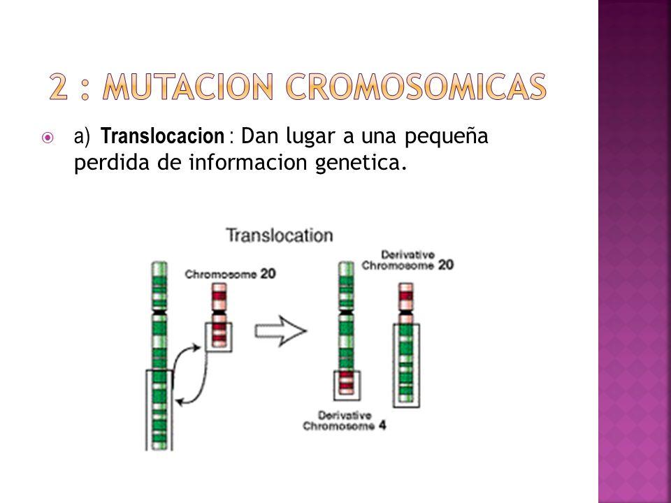 a) Translocacion : Dan lugar a una pequeña perdida de informacion genetica.