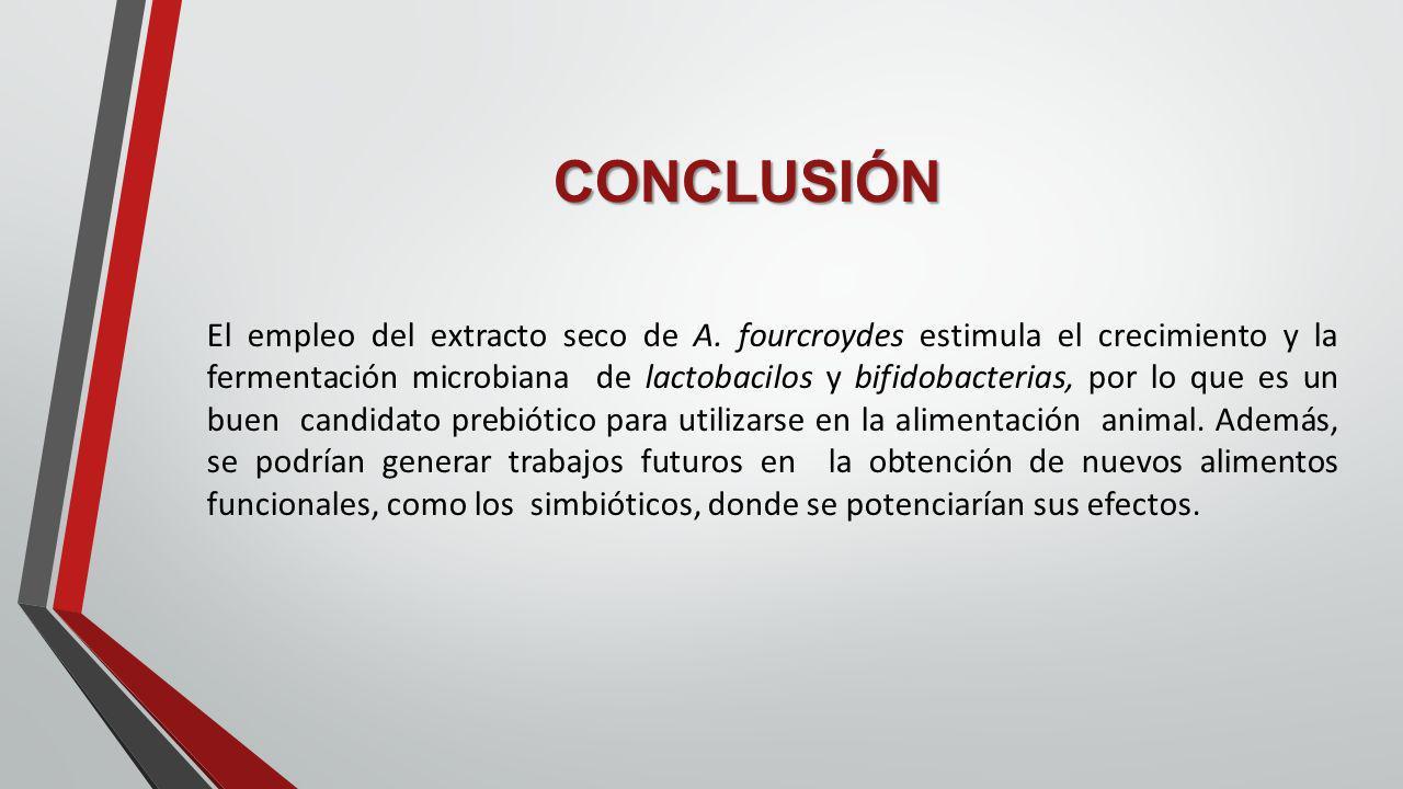 CONCLUSIÓN El empleo del extracto seco de A. fourcroydes estimula el crecimiento y la fermentación microbiana de lactobacilos y bifidobacterias, por l