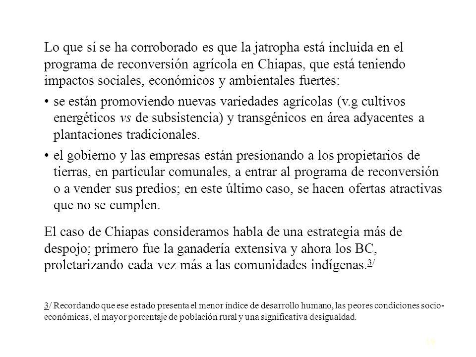 19 Lo que sí se ha corroborado es que la jatropha está incluida en el programa de reconversión agrícola en Chiapas, que está teniendo impactos sociale